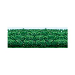 Green Hedges Pack of 8