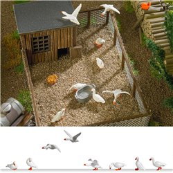 8 Domestic geese