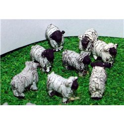 A70p Painted Sheep 8off N Scale 1:148