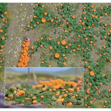 Ho Pumpkin Field